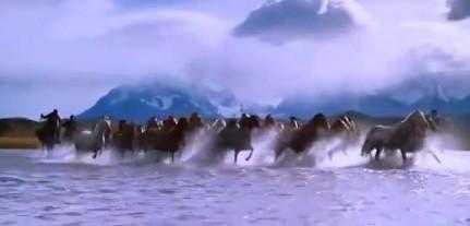 马群驰骋海边、山坡、草原...